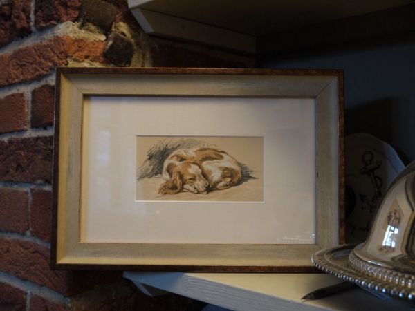 Little Coloured Spaniel - curled up  1930's print by Lucy Dawson